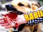 ilustrasi-anjing-rabiesbangkapos.jpg