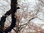 ilustrasi-keindahan-yoyogi-park-tokyo-jepang.jpg