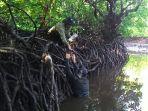 ilustrasi-mangrove.jpg