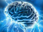ilustrasi-otak-manusia.jpg