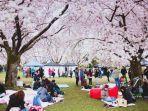 ilustrasi-piknik-di-bawah-pohon-sakura-di-jepang.jpg