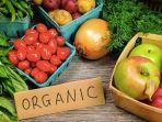 ilustrasi-sayuran_diet-vegan.jpg