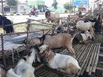 kambing-yang-dijual-oleh-yadi-di-berok-bangka-tengah.jpg