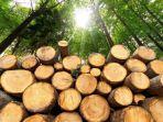 kayu-cendana-kayu-paling-mahal-di-dunia-karena-memiliki-banyak-khasiat-untuk-kesehatan.jpg