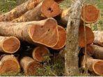 kayu-cendana-termahal-di-dunia.jpg