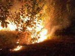 kebakaran-hutan-1.jpg