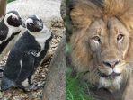 kebun-binatang-san-diego-tetap-buka-namun-pengunjung-bisa-me.jpg