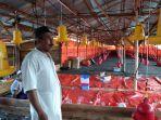 ketua-dprd-kabupaten-bangka-iskandar-alias-sidi-membuka-usaha-ternak-ayam-pedaging.jpg