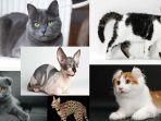 kucing-kucing-harga-mahal.jpg
