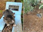 kucing-setia_20161104_091228.jpg
