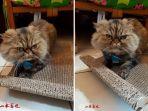 kucing-singa_20170516_065912.jpg