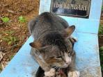 kucing_20161104_154502.jpg