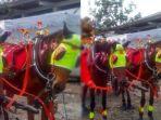 kuda-mulan-jamilah_20171108_153039.jpg
