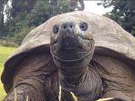 kura-kura-jonathan-hewan-tertua-di-dunia-berusia-184-tahun-yang-baru-pertama-kali-mandi_20180427_215841.jpg