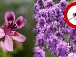 lavender_20180809_222649.jpg