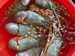lobster092.jpg