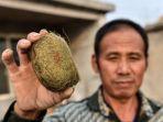 penduduk-desa-ini-menemukan-batu-empedu-babi-yang-langka_20180710_234857.jpg