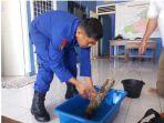 penemuan-amunisi-oleh-nelayan-muntok-kabupaten-bangka-barat_20180928_104946.jpg