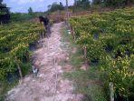 petani-cabai-di-belitung_20170117_205311.jpg