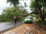 petugas-kepolisian-saat-mengatur-lalu-lintas-akibat-adanya-pohon-tumbang.jpg