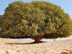 pohon-sahabi_20170529_145523.jpg