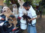 pria-di-bali-bonceng-enam-anjingnya-dengan-motor-bebek141414.jpg