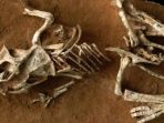 protoceratops-andrewsi_20170113_193523.jpg
