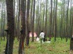pt-tusam-hustani-lestari-thl-memperoleh-hak-pengusahaan-hutan-tanaman-industri-hphti.jpg