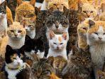 pulau-aoshima-pulau-surga-bagi-para-pecinta-kucing-di-jepang.jpg