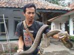 rentul-pawang-king-cobra-asal-kuningan.jpg