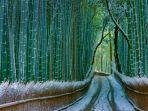 sagano-bamboo-forest.jpg
