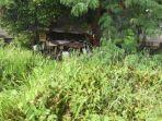 saung-tempat-tinggal-caswara-bocah-pemulung-di-tengah-rawa-dan-semak-belukar1313.jpg