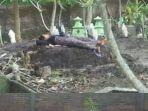 seorang-ibu-tidur-di-atas-makam-anaknya.jpg