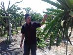 sudarto-petani-buah-naga-ini-saat-menunjukan-tunas-muda-pohon-buah-naga-yang-diserang-hama_20180406_185736.jpg