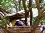 takut-terinfeksi-virus-corona-keluarga-ini-memilih-tinggal-di-atas-pohon.jpg