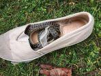 ular-piton-di-sepatu.jpg
