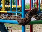 ular-piton-yang-ditemukan-di-wahana-bermain-anak-taman-kota-manggar-sabtu-882020.jpg