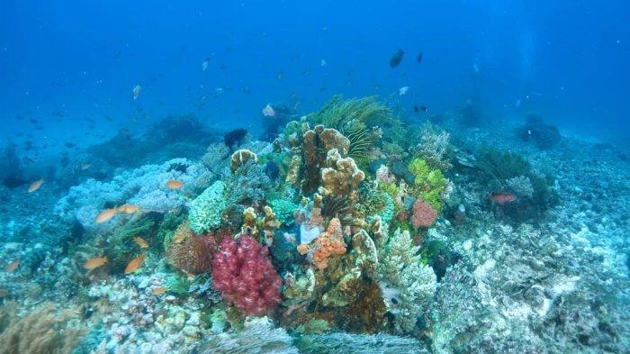 7 Pulau di Nusa Tenggara yang Sering Dijuluki Maldives nya Indonesia