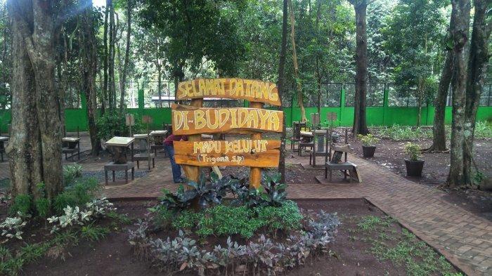 Khasiat Madu Hutan Mampu Naikkan Imun Tubuh, Cocok Dikonsumsi di Masa PPKM Darurat