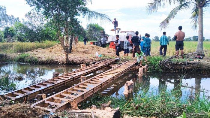 Musim Panen, Petani di Tinggiran Darat Batola Kesulitan Akses Jembatan Bawa Combine