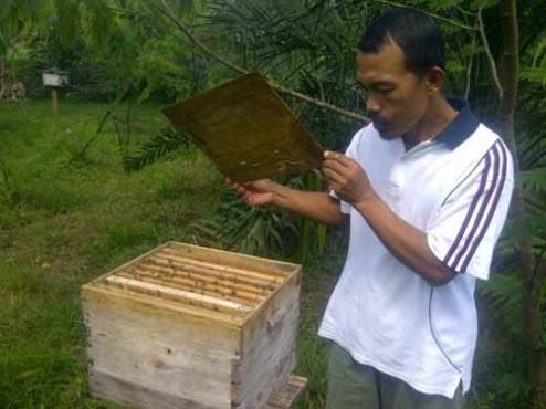 Warga bersiap memanen madu lebah.
