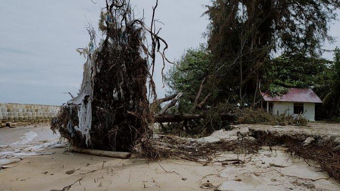 Abrasi Pantai Ujung Pandaran Teluk Sampit Makin Parah, Bangunan Sabuk Pemecah Ombak Diharap Kokoh