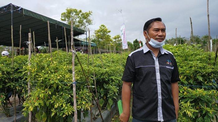 Bukan Pemerintah, Petani Cabai di Sampit Kotim Masih Mengandalkan Bantuan Modal dari Tengkulak