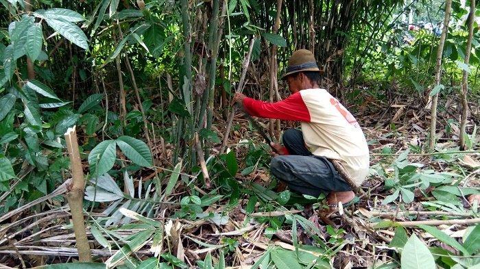 Menguak Magnit Kampung Sungaitabuk Kabupaten Banjar, Alami dan Masih Dikelilingi Hutan