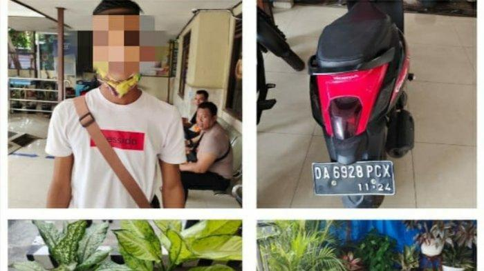 Pencurian di Kalsel, Tertarik Melihat Tanaman Bagus, AJ Curi Sri Rezeki Milik Warga Banjarbaru