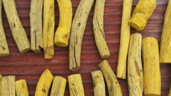 Akar Kuning Herbal Kalimantan, Dipakai Penduduk Pedalaman Sebagai Penawar Sakit Kuning atau Malaria