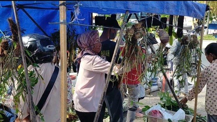 Anggrek Agar Selalu Berbunga dan Tahan Lama, Simak Tips dari Ketua Yayasan Anggrek Meratus