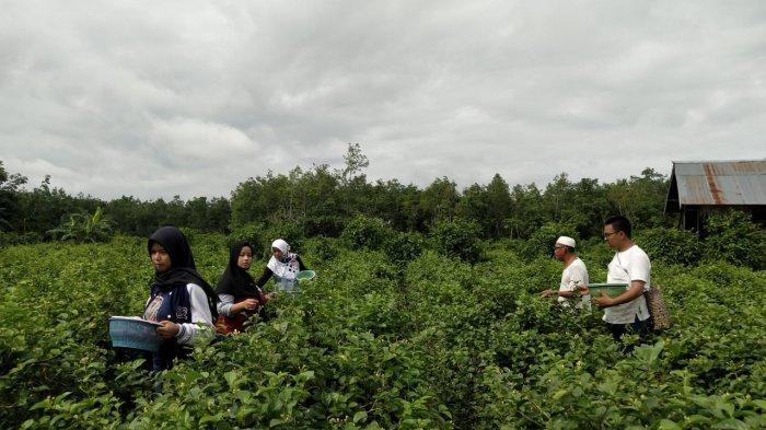 Kembangkan Bunga Melati Petani Kabupaten Banjar Mengaku Baunya Bisa Hilangkan Stres Banjarmasin Post