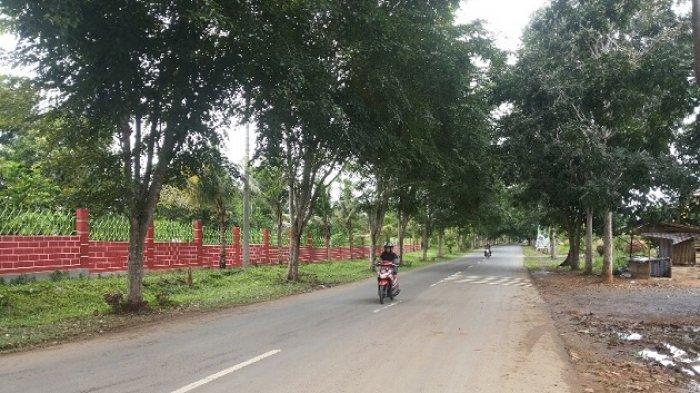 Pepohonan di Jalan Dharma Praja Batulicin Ini Bakal Hilang