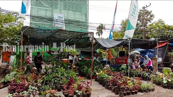 Wisata Kalsel, Tersedia yang Murah Hingga Mahal di Pasar Tanaman Hias Kertak Hanyar